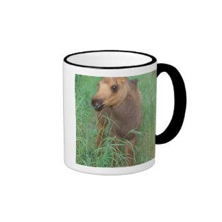 moose, Alces alces, newborn calf stands in 2 Ringer Mug