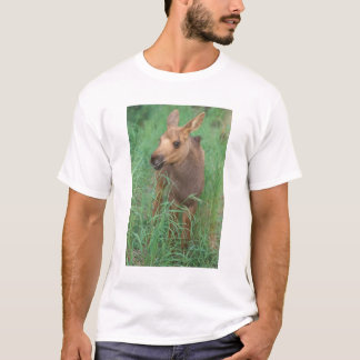 moose, Alces alces, newborn calf stands in 2 T-Shirt
