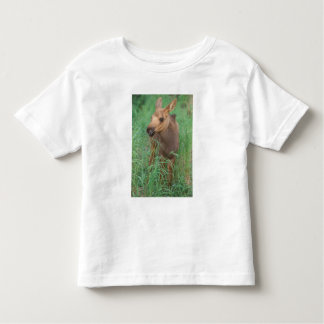 moose, Alces alces, newborn calf stands in 2 Tee Shirts