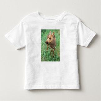 moose, Alces alces, newborn calf stands in T-shirt