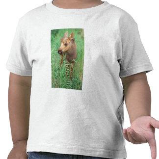 moose Alces alces newborn calf stands in Tee Shirt