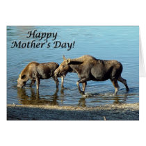 "Moose and Calf ""Happy Mother's Day"" Card"