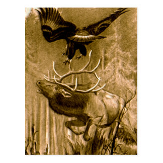 Moose and Eagle Drawing Postcard
