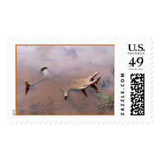 moose antler stamps