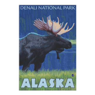 Moose at Night - Denali Nat'l Park, Alaska Print