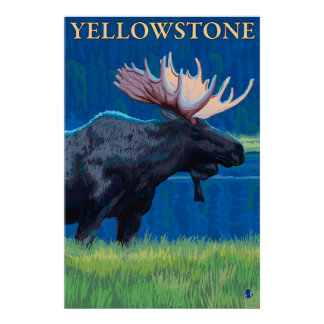 Moose at Night - Yellowstone National Park Poster