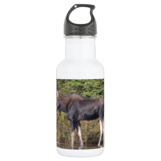 Moose at Sandy Stream Pond Stainless Steel Water Bottle