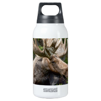 Moose Be Too Cool Thermos Bottle