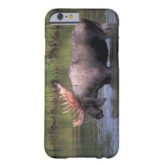 moose, bull in a kettle pond and feeds on barely there iPhone 6 case