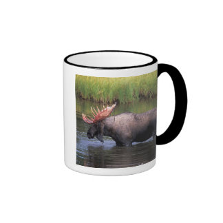 moose, bull in a kettle pond and feeds on ringer coffee mug