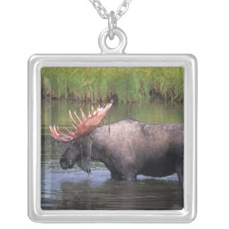 moose, bull in a kettle pond and feeds on square pendant necklace