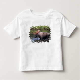 moose, bull in a kettle pond and feeds on tshirt