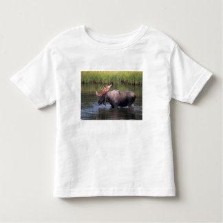 moose, bull in a kettle pond and feeds on t shirts