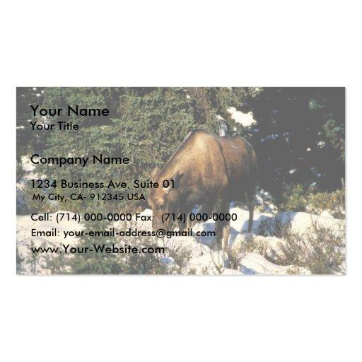 Moose Business Card Templates