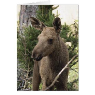 Moose Calf Cards