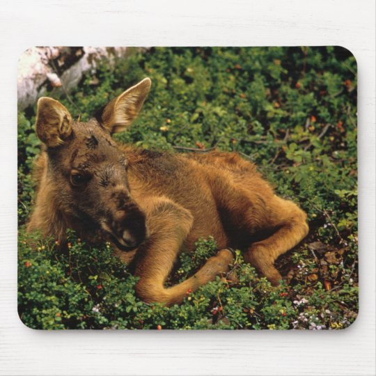 Moose Calf Mouse Pad