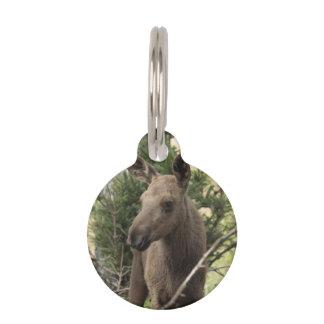 Moose Calf Pet Tag
