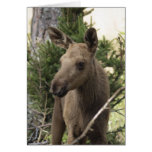 Moose Calf Stationery Note Card