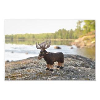 Moose Camping Photo Print