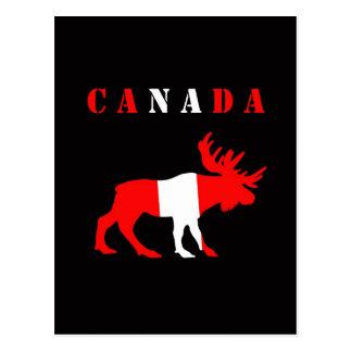 moose canada postcard