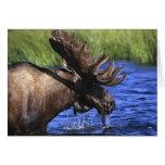 Moose Card