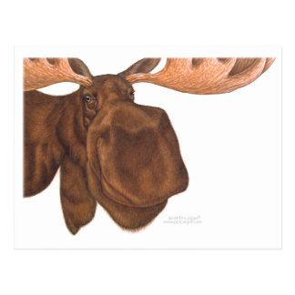 moose_card post card