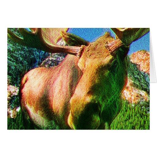 Moose Cards