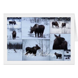 Moose Collage; Happy Birthday Card