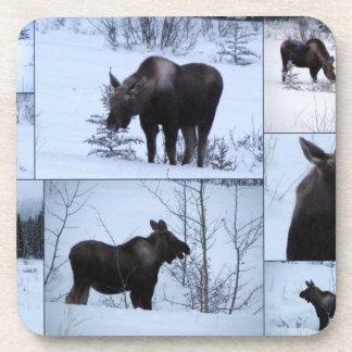 Moose Collage; No Text Beverage Coaster
