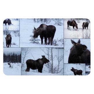 Moose Collage; No Text Rectangular Photo Magnet
