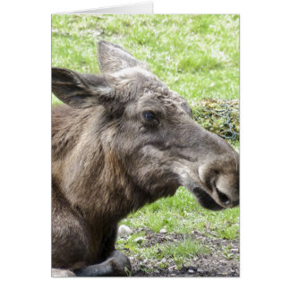 Moose Cow Profile Shot Card