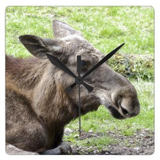 Moose Cow Profile Shot Square Wall Clock