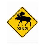 Moose Crossing Highway Sign Post Card