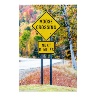 Moose Crossing Photo Print