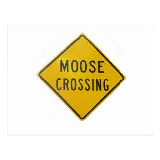 Moose Crossing Postcard