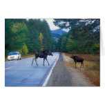 Moose Crossing the Kancamagus Highway Cards