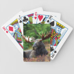 Moose Deck Of Cards