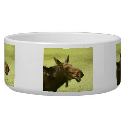 Moose Did Someone Say Cake Bowl