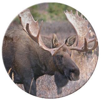 Moose Dinner Plate