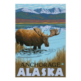 Moose Drinking at Lake - Anchorage, Alaska Posters