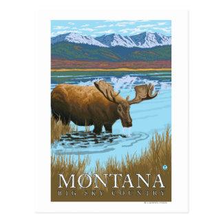 Moose Drinking at Lake - Montana Post Card