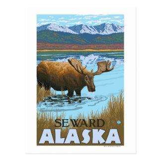 Moose Drinking at Lake - Seward Alaska Postcard