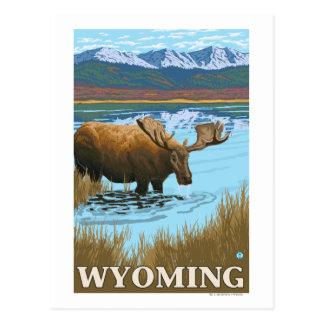 Moose Drinking at Lake - Wyoming Post Card