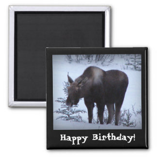 Moose Eating Branches; Happy Birthday 2 Inch Square Magnet