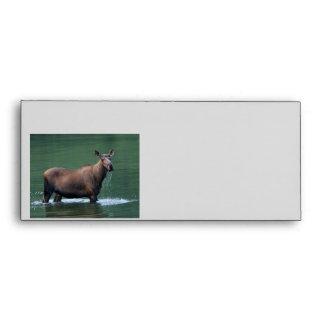 moose envelope