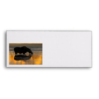 Moose & Fall Reflections Envelope