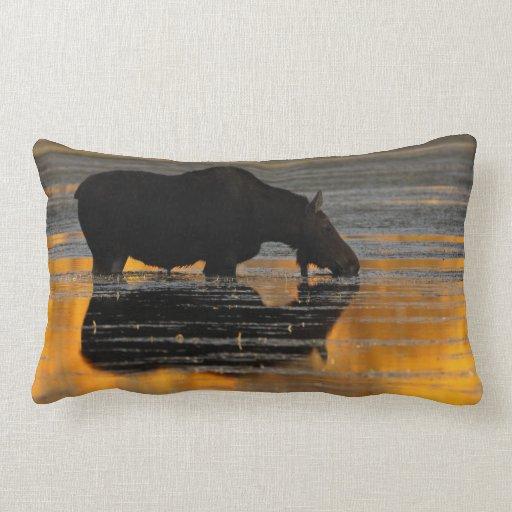 Moose & Fall Reflections Pillow