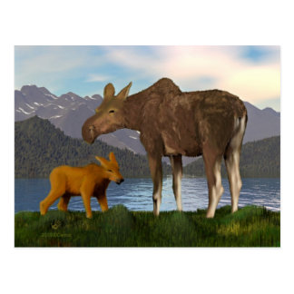 Moose in the Meadow Postcards