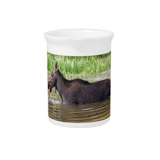 Moose in water drink pitcher