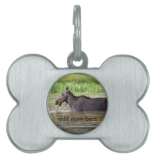 Moose in water pet tag